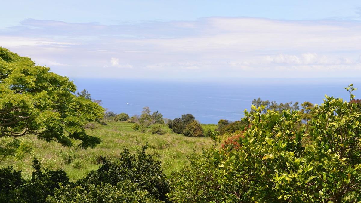 Kávová plantáž Kona Coffee na Havaji | © Eric Sonstroem