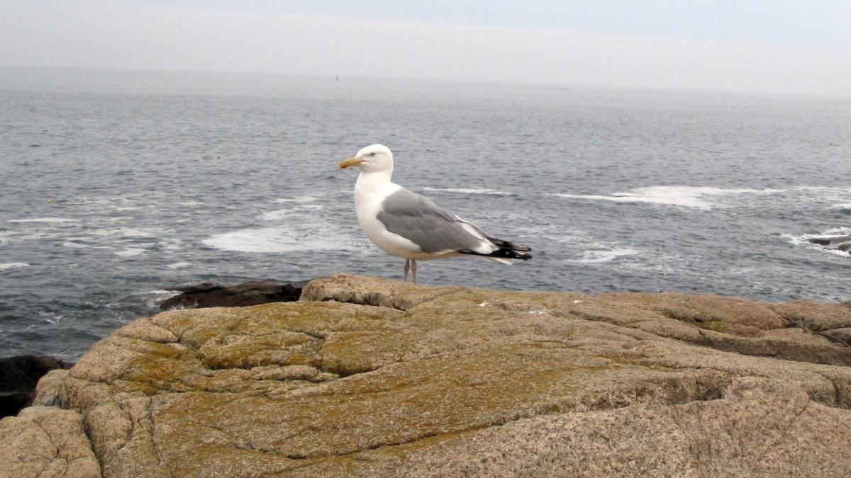 Pobřeží Atlantiku v národním parku Acadia