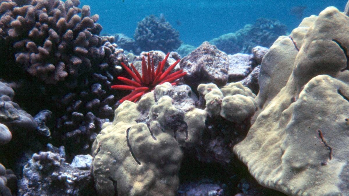 Národní park Americká Samoa | © National Park Service