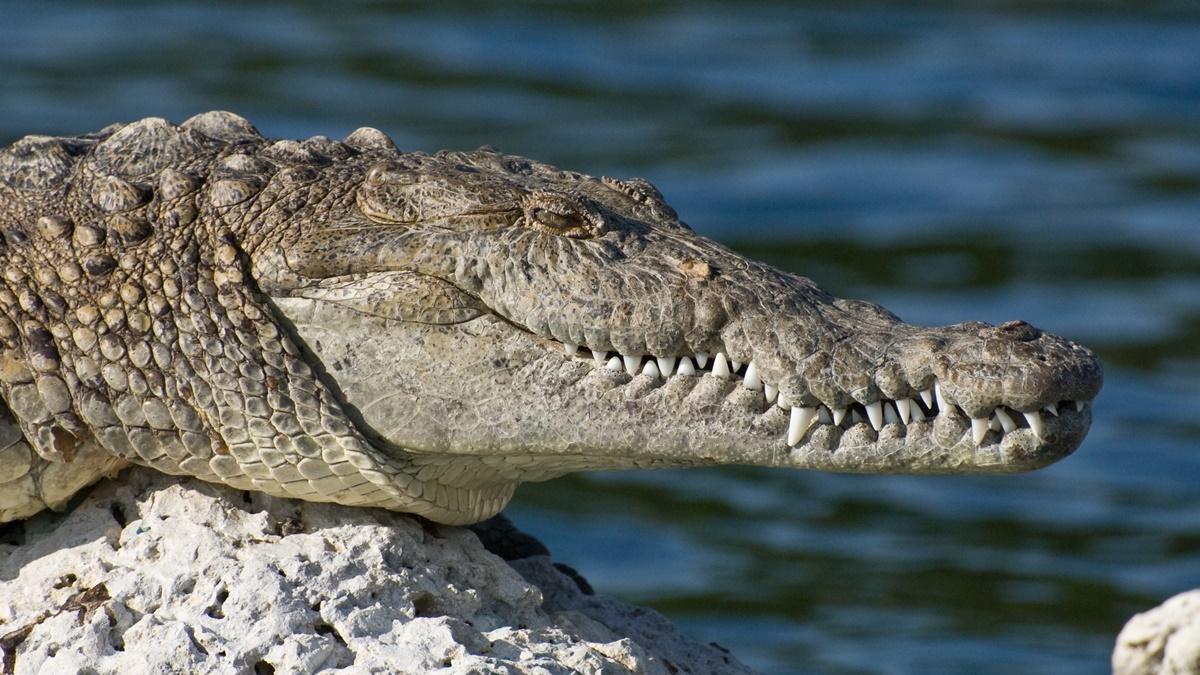 Biscayne National Park   © National Park Service