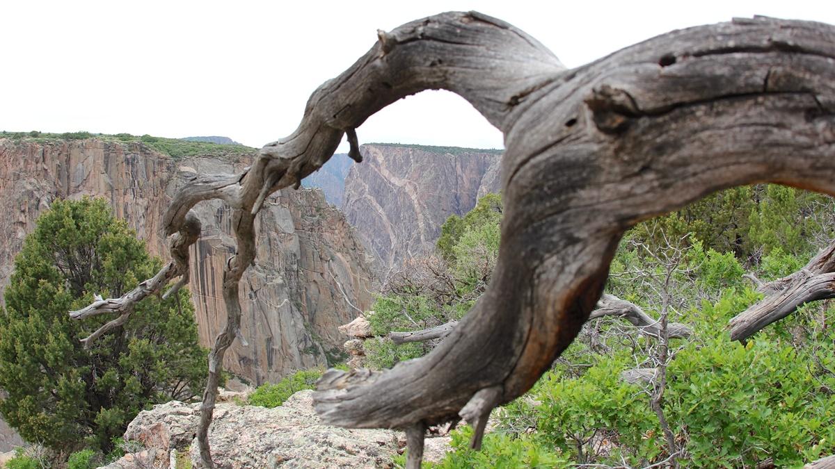 North Rim v národním parku Black Canyon of the Gunnison | © daveynin