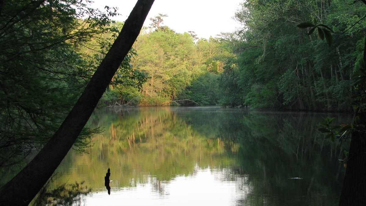 Weston Lake, Congaree National Park | © National Park Service