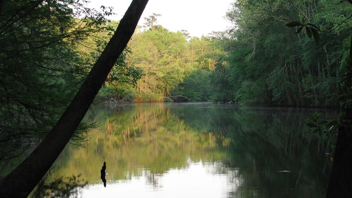 Weston Lake, Congaree National Park   © National Park Service