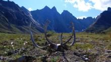 Národní park Gates of the Arctic: Informace, fotky, rady atipy pro návštěvníky