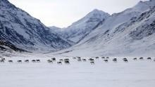narodni-park-gates-of-the-arctic-informace-fotky-rady-a-tipy-pro-navstevniky-6