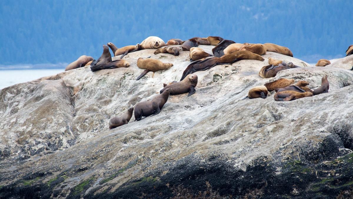 South Marble Island v národním parku Glacier Bay | © mark byzewski