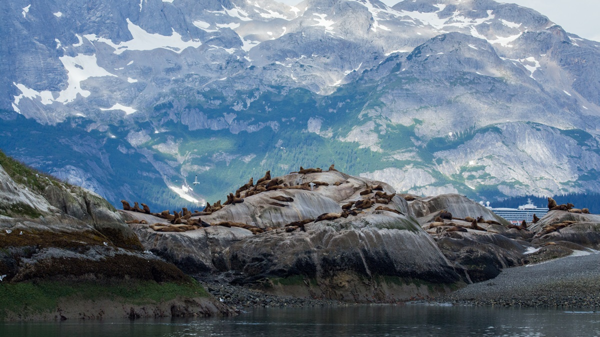 Lachtani v národním parku Glacier Bay | © mark byzewski