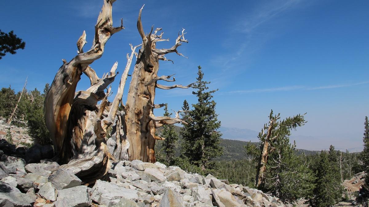 Národní park Great Basin | © Rick Cooper