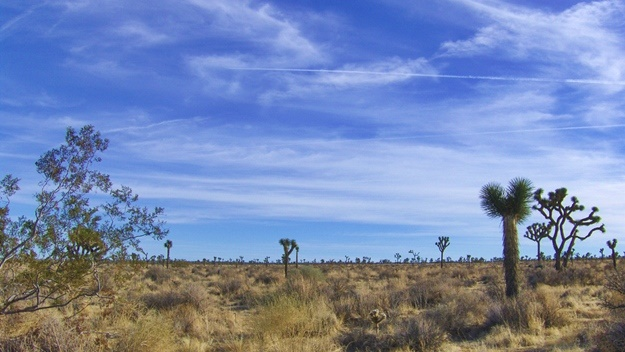 Joshua Tree National Park | © jpopesku1