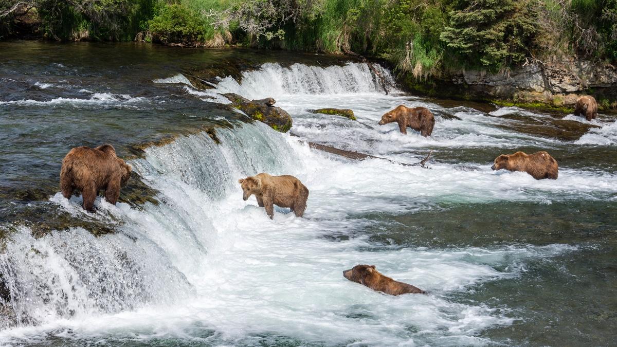 Medvědi u vodopádů Brook Falls v národním parku Katmai | © Christoph Strässler