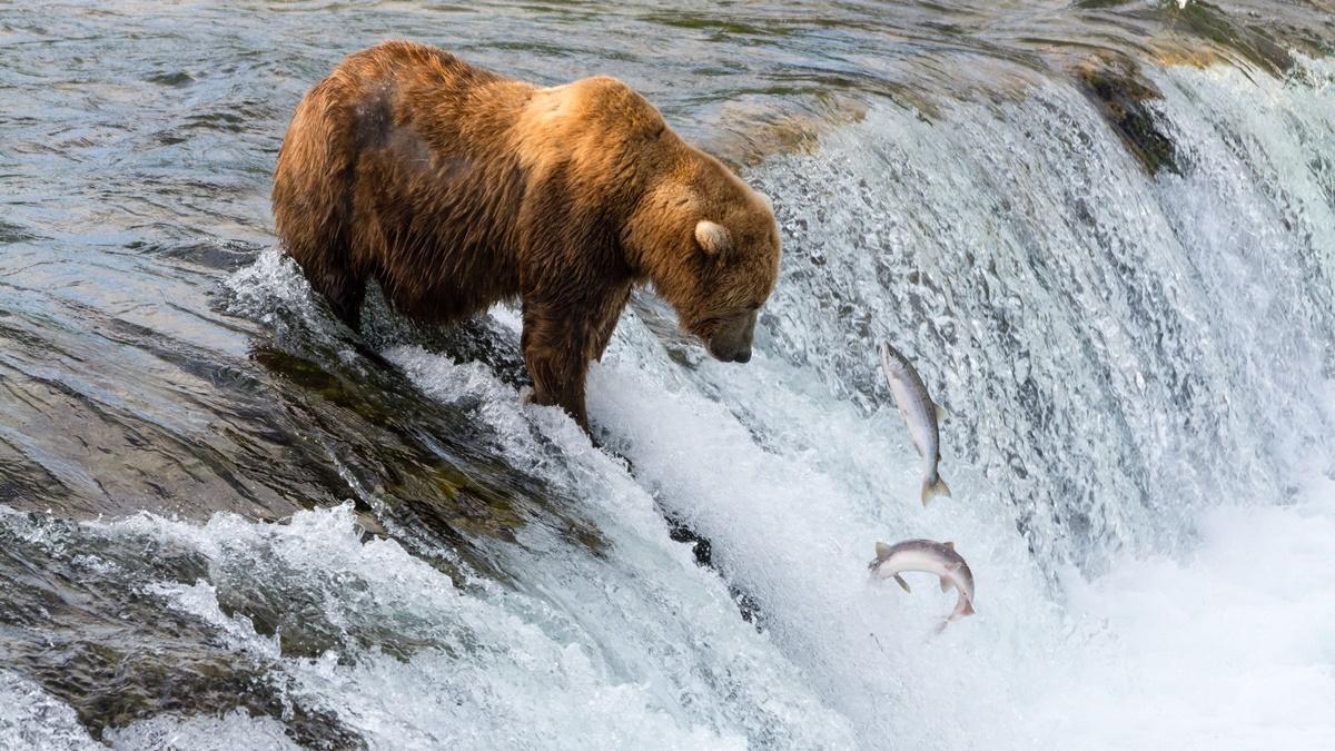 Medvědi v NP Katmai | © Christoph Strässler