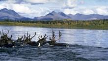 narodni-park-kobuk-valley-informace-fotky-rady-a-tipy-pro-navstevniky-3