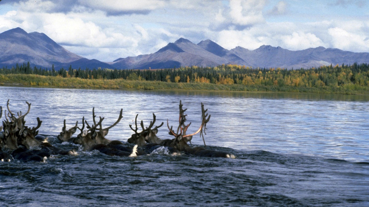 Kobuk Valley National Park | © Education Specialist