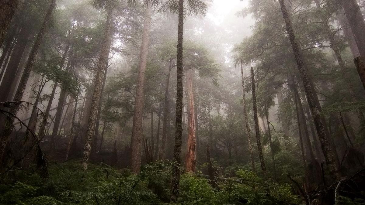 Národní park Mount Rainier | © pfly