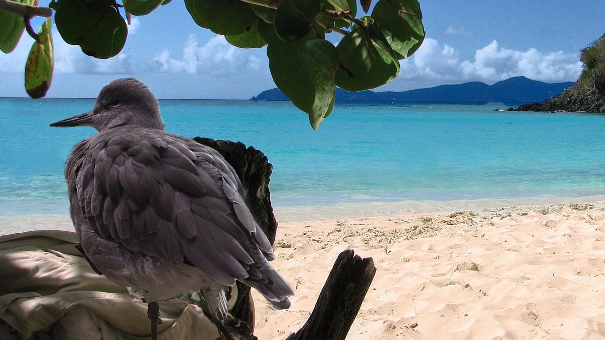 Virgin Islands National Park | © Rennett Stowe