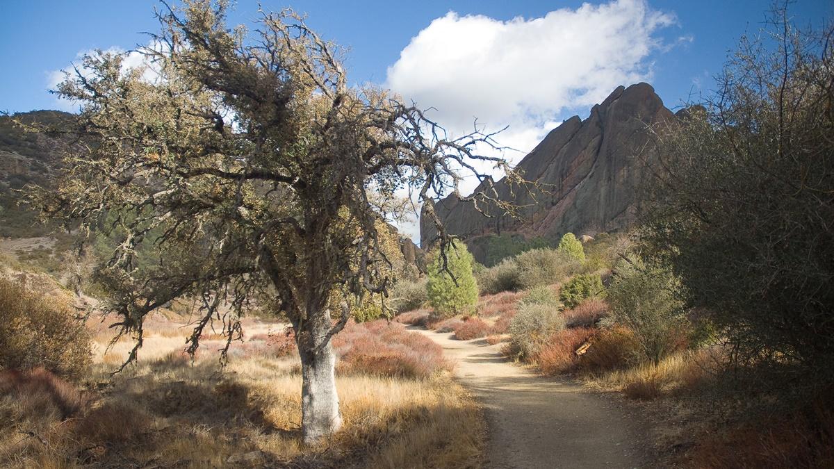 Pinnacles National Park | © oliver.dodd