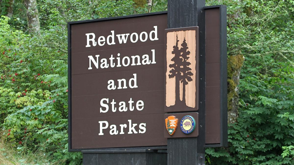 Redwoodský NP | © Greg Schechter