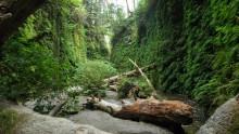 narodni-park-redwood-informace-fotky-rady-a-tipy-pro-navstevniky-6