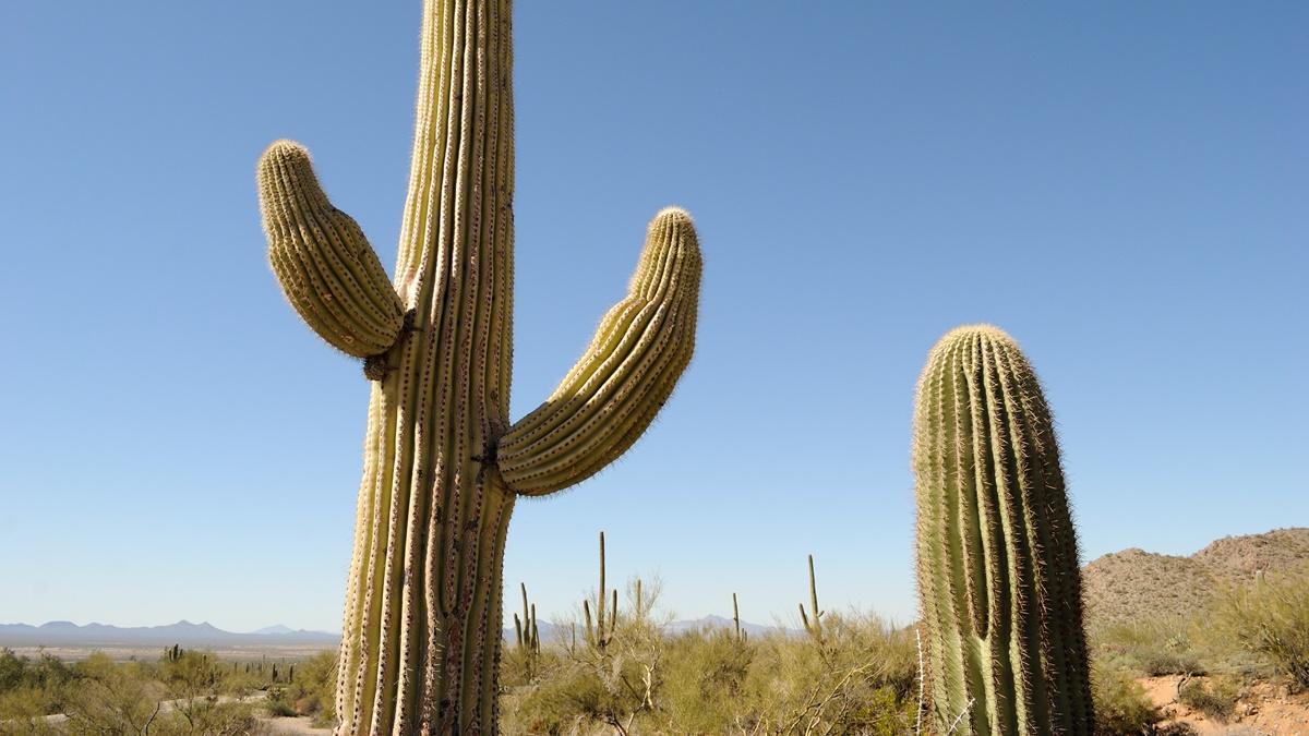 Národní park Saguaro | © Daniel Ramirez