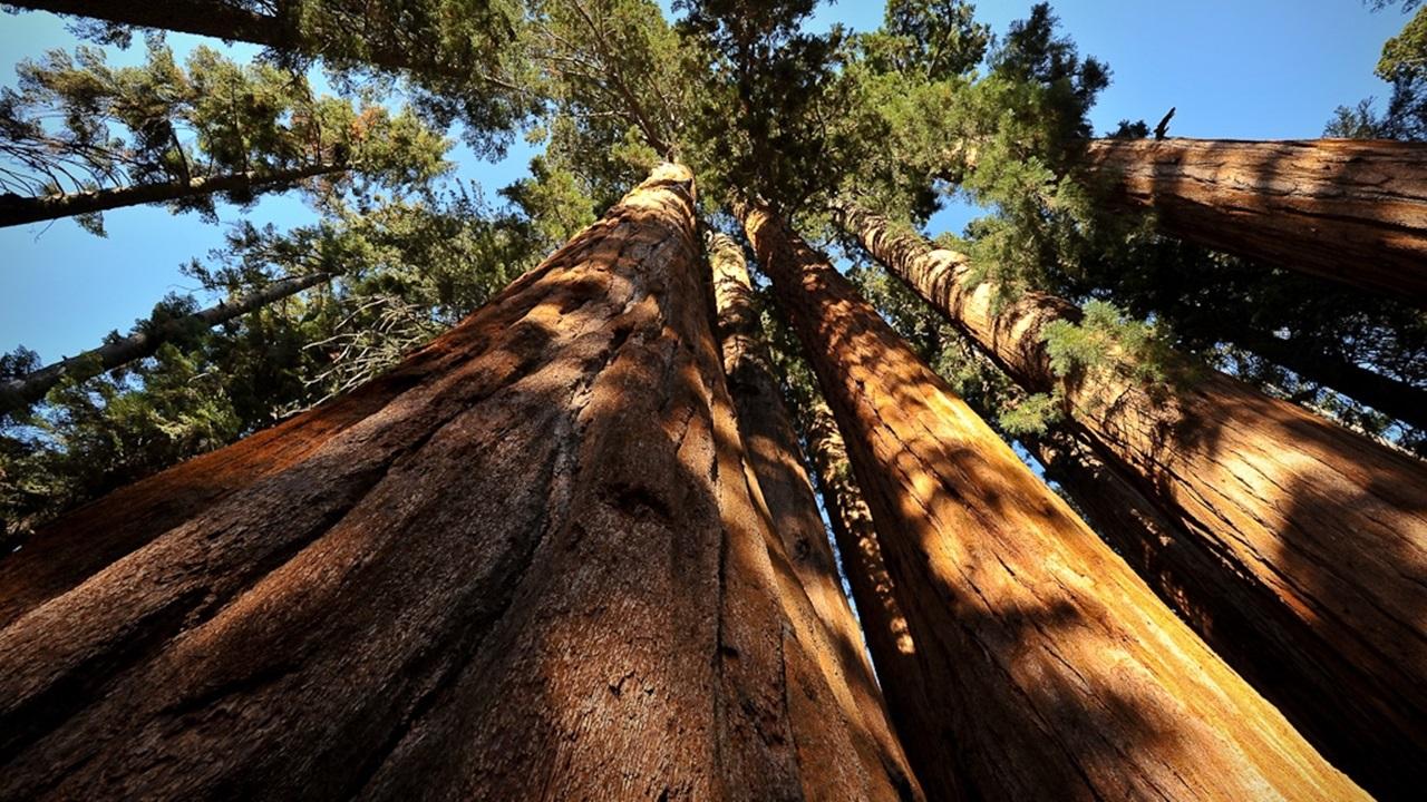 Národní park Sequoia v Kalifornii | © bumeister1