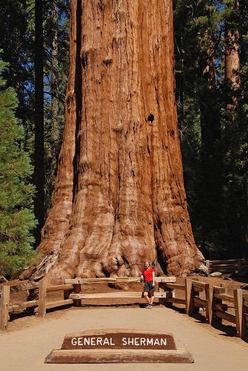 General Sherman v Národním parku Sequoia | © Tobias