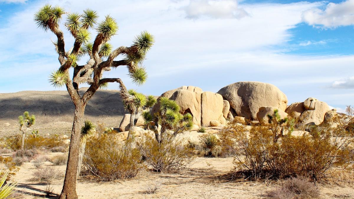 Národní park Joshua Tree | © nightowl / Pixabay.com