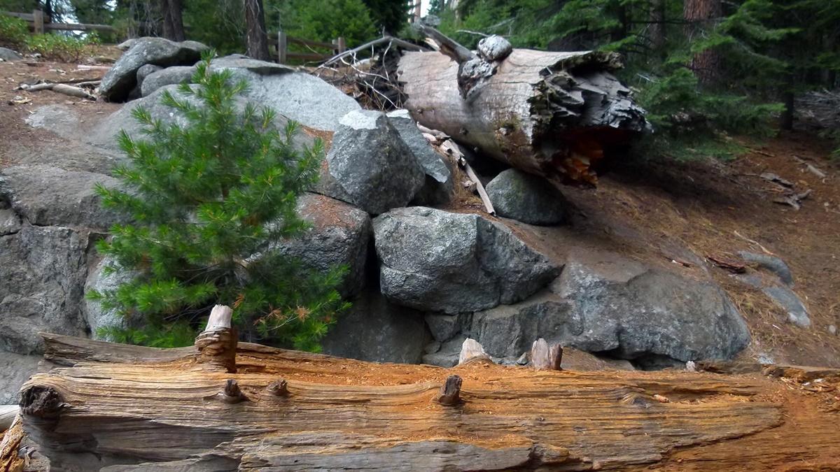 Národní park Sequoia | © werner22brigitte / Pixabay.com