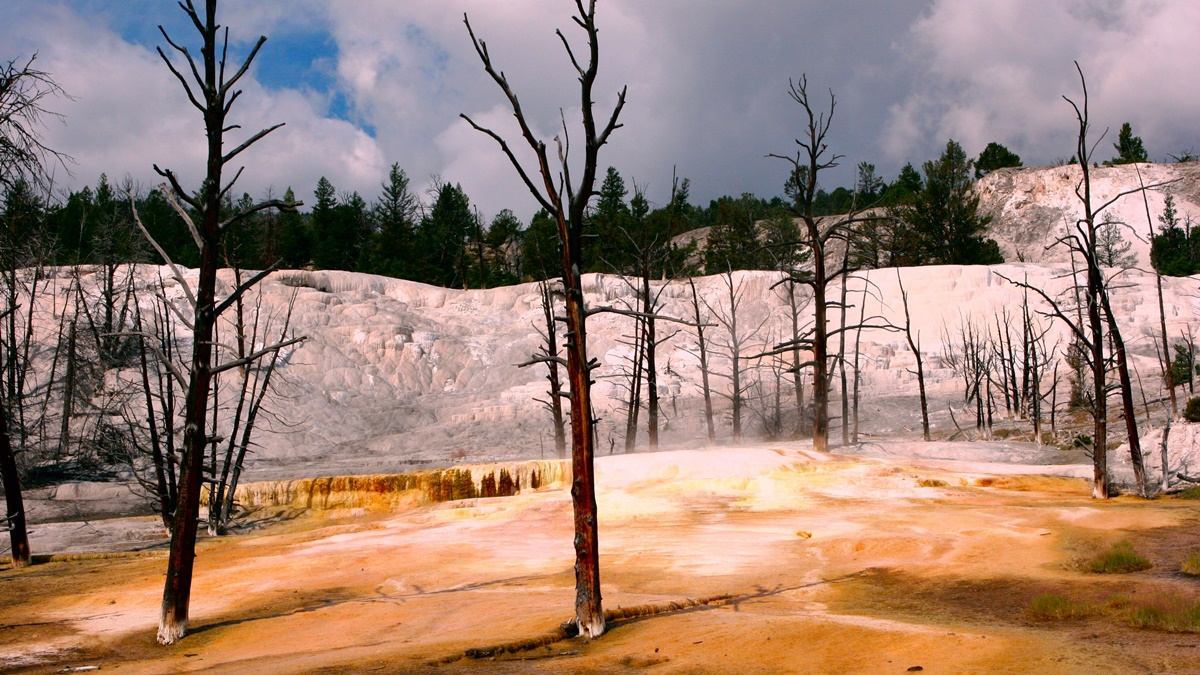 Yellowstone National Park | © stevetulk